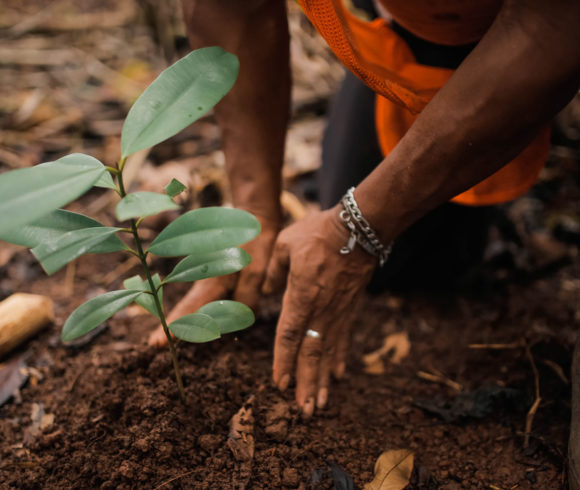 Build your own climate protection forest!